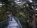松林步道 - Pine Path - 2012.09 - panoramio.jpg