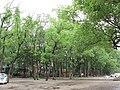 楠溪滩林 - panoramio.jpg