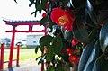 火雷神社の椿の花 五條市御山町 Camellia at Honoikazuchi-jinja 2014.3.28 - panoramio.jpg