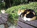 猫 (8706044940).jpg