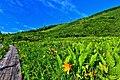黒菱平鎌池湿原の風景 - panoramio.jpg