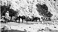 01565 Grand Canyon Historic- Fred Harvey Pack Train c.1948 (4762104228).jpg