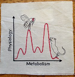 063-Physiology and Metabolism (19326095405).jpg