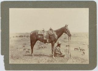 Wrangler (profession) Animal (especially horse) handler