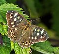 1024 Schmetterling-3365.jpg