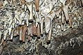 116 Broken stalactites 3 (8316559093).jpg