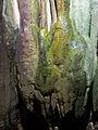 125 Cova de Sant Miquel del Fai, cortinatge d'estalactites amb verdet.JPG