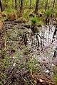 15-05-09-Biosphärenreservat-Schorfheide-Chorin-Totalreservat-Plagefenn-DSCF5550-RalfR.jpg