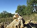 16 November 2016, Sheep scull, Countryside, Pinhal, Albufeira..JPG
