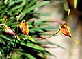2010 Pacific Orchid Expo 12 - cropped.jpg