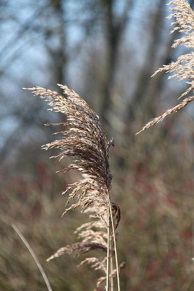Schelde bij Vurste (Merelbeke)