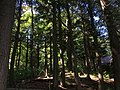 2015-08-20 15 50 47 Eastern Hemlock grove along the west shore of Spring Lake in Berlin, New York.jpg