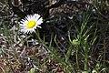 2015.06.06 10.13.14 IMG 2629 - Flickr - andrey zharkikh.jpg
