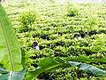 20160127 Sri Lanka 4060 crop sRGB (25674524341).jpg