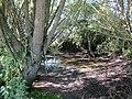 2018-07-24 Pond, Sandy Lane, Hungry Hill, Norfolk (4).JPG