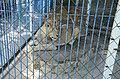 2019-08-10. Зоопарк в Придорожном 057.jpg