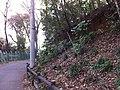 2 Chome Jindaiji Minamimachi, Chōfu-shi, Tōkyō-to 182-0013, Japan - panoramio (1).jpg