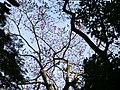 2 Chome Tsukimichō, Tajimi-shi, Gifu-ken 507-0043, Japan - panoramio (12).jpg