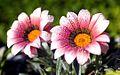 2flowers.jpg