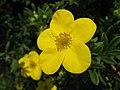 4178 - Thun - Schloss Thun - Flowers.JPG