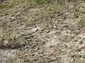 Așezare Bucșani - GR-I-s-B-14766 (2).JPG