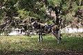 AFRICAN WILD DOG (14007693164).jpg