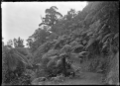 A bend on the Karekare Road with tree ferns above and below the road. ATLIB 287278.png