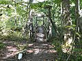 A suspension footbridge in Prince William Forest Park. - panoramio.jpg
