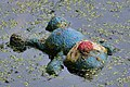 Abandoned Stuffed Animal - Kitchener, Ontario 01.jpg