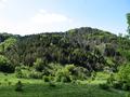 Abetina di Fossa Cupa - Monti della Maddalena (Potenza).PNG