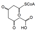 Activated 3,5-diketoheptanedioate.png