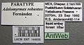 Adelomyrmex robustus lacm ent 144656 label 1.jpg