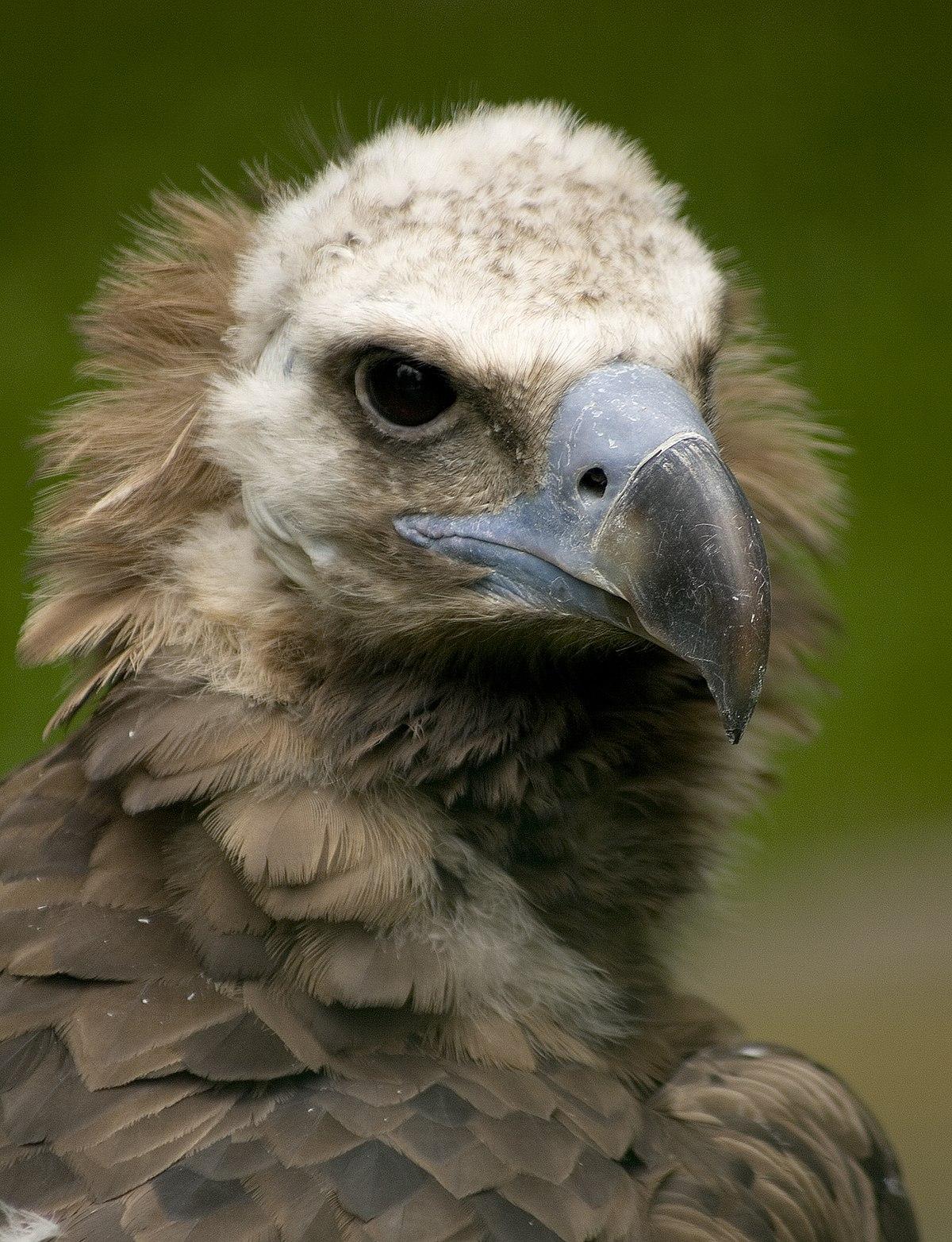 veľké ázijské vtáky veľký penis v spandex