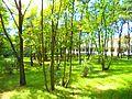 Akademicka Przychodnia Lekarska w Toruniu, park.jpg
