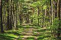 Allee im Wald.jpg