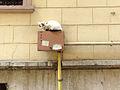 Alley Cat (8626062833).jpg