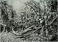 Am Tendaguru - Leben und Wirken einer deutschen Forschungsexpedition zur Ausgrabung vorweltlicher Riesensaurier in Deutsch-Ostafrika (1912) (17977405638).jpg