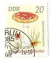 Amanita muscaria DDR.JPG