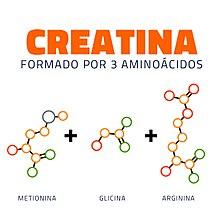 como tomar creatina aminoacidos y proteinas