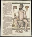 Anatomical Fugitive Sheets of a Skeleton, Male Figure and a Female Figure WDL3961.pdf