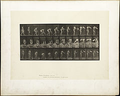 Animal locomotion. Plate 213 (Boston Public Library).jpg