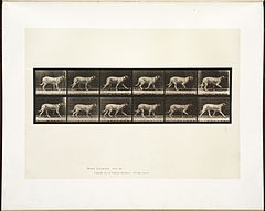 Animal locomotion. Plate 706 (Boston Public Library).jpg
