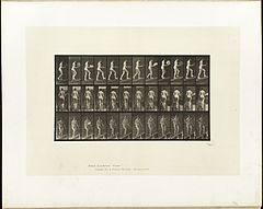 Animal locomotion. Plate 78 (Boston Public Library).jpg