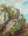 Anna Stainer-Knittel - Alpine Roses.jpg