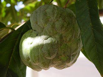 Annonaceae - Annona squamosa fruit