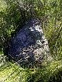 Ant Mound (3868000797).jpg