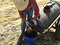 Application produits ecosan (digestat) à Dayet Ifrah, Maroc (12084859484).jpg