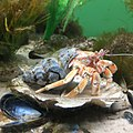 AquariumAmrum.jpg