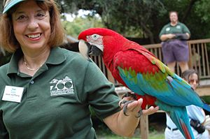 Green-winged Macaw (also known as the Red-and-...