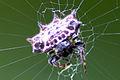 Aranha Spider.jpg